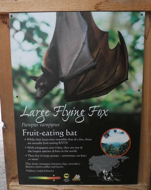 Columbus Zoo - Large Flying Foxes