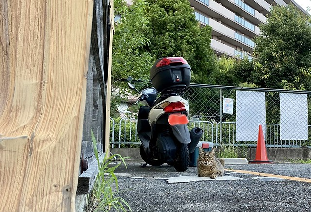 Today's Cat@2021−07−24