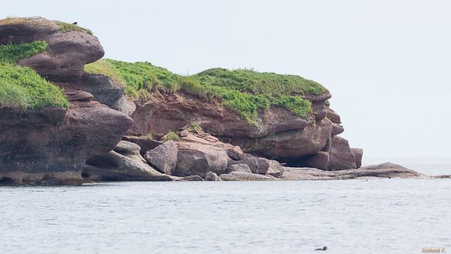 Île Bonaventure, Gaspésie, PQ, Canada - 8679