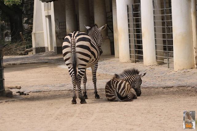 Besuch Zoo Zoo Berlin 04.07.21.21040