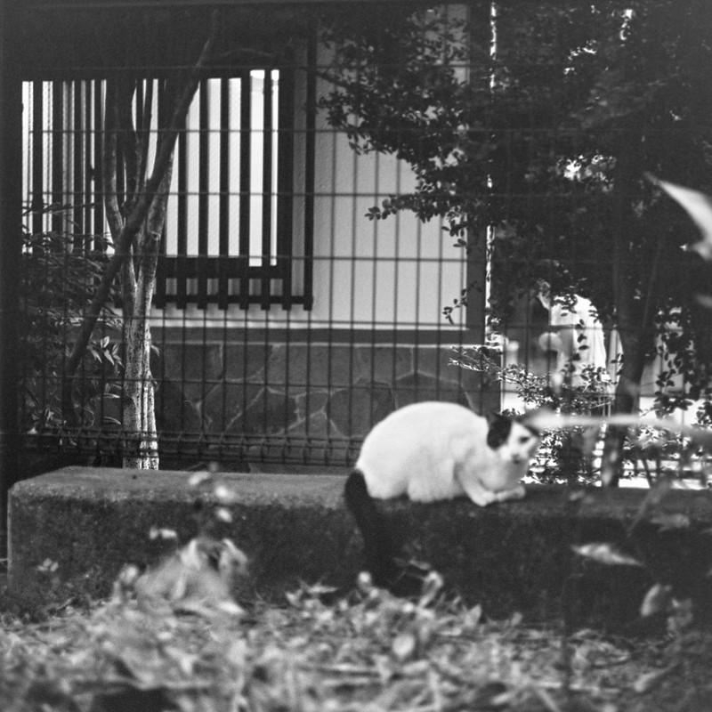 04ZENZA BRONICA S2+NIKKOR 75mm f2 8+KODAK 400TX雑司ヶ谷三丁目鬼子母神の猫 黒ブチ