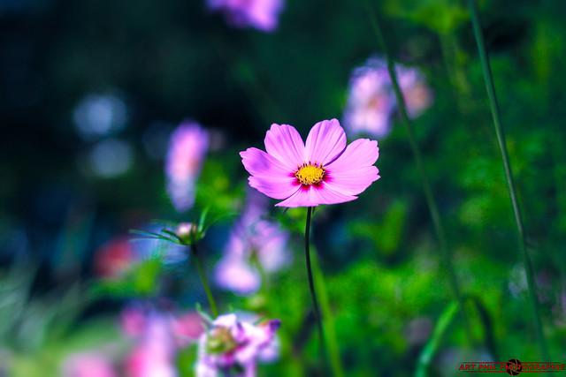 Fleurs Pétales de Couleurs et Bokeh