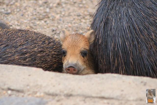 Besuch Zoo Zoo Berlin 04.07.21.21054