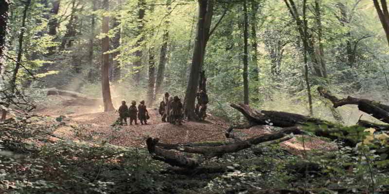 The dwarves in Burnham Beeches