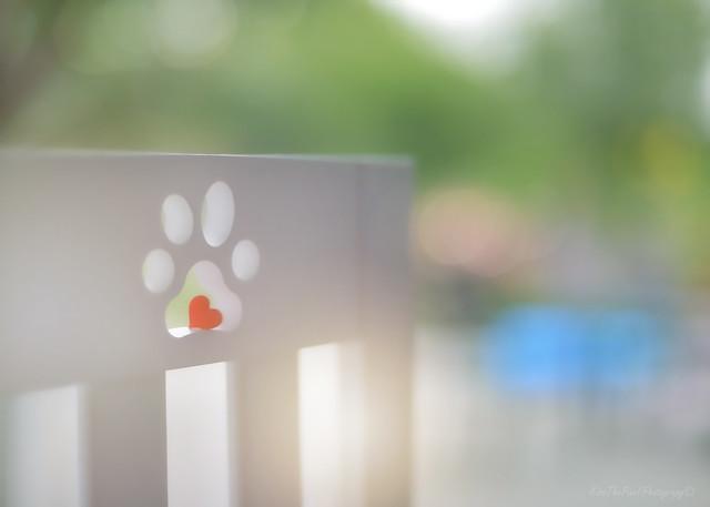Dog Gate...