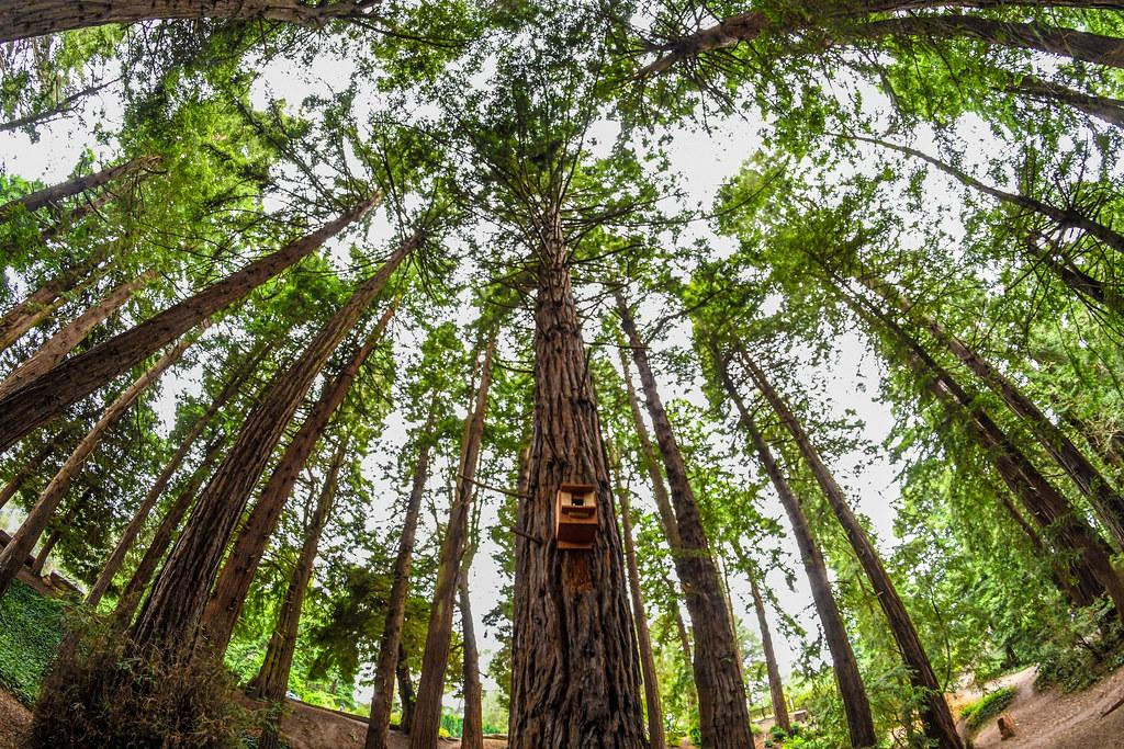 Trees Golden Gate Park
