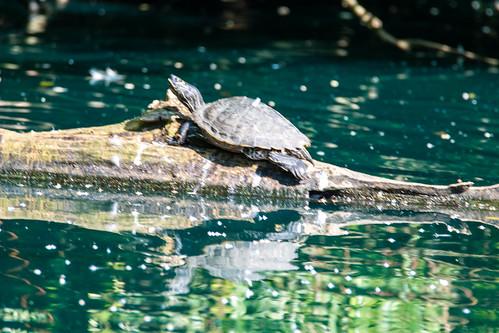 Turtle returns