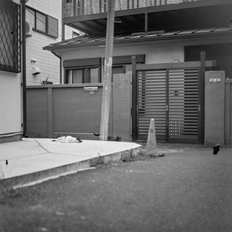 10ZENZA BRONICA S2+NIKKOR 75mm f2 8+KODAK 400TX雑司ヶ谷三丁目七曲りの路地の猫 黒ブチ 黒