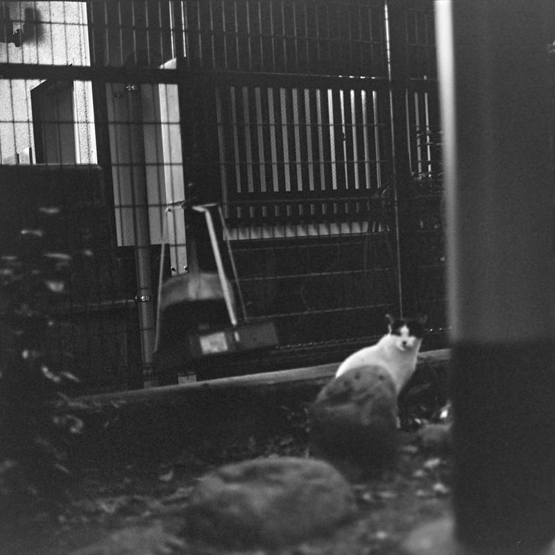 03ZENZA BRONICA S2+NIKKOR 75mm f2 8+KODAK 400TX雑司ヶ谷三丁目鬼子母神の猫 黒ブチ