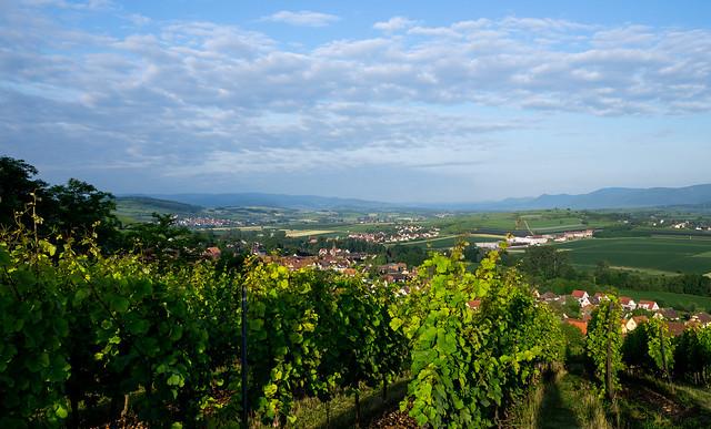 from Scharrachberg