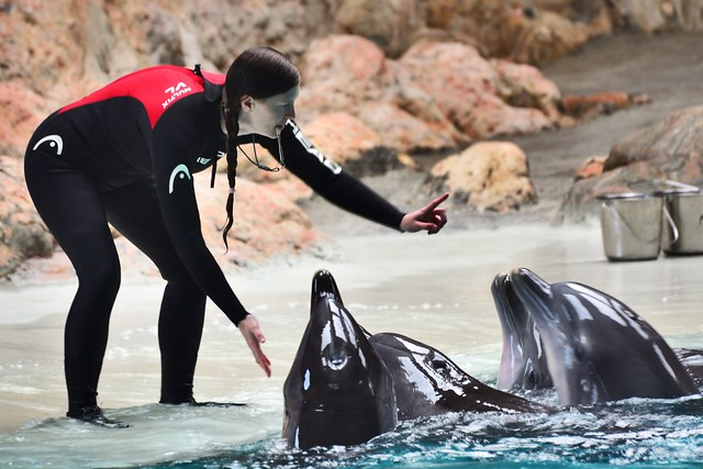 Dolphins, the human friends from the waters