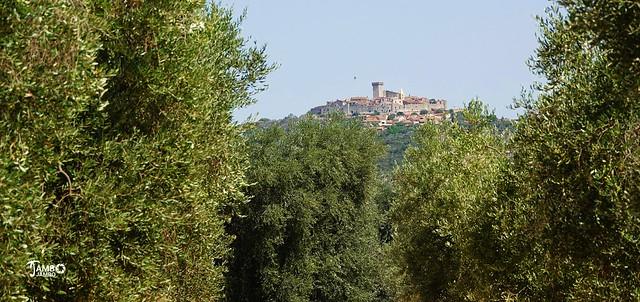 Il paese sopra gli olivi - The village above the olive trees