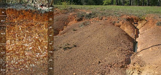 Plinthic Kandiudults and landscape GA