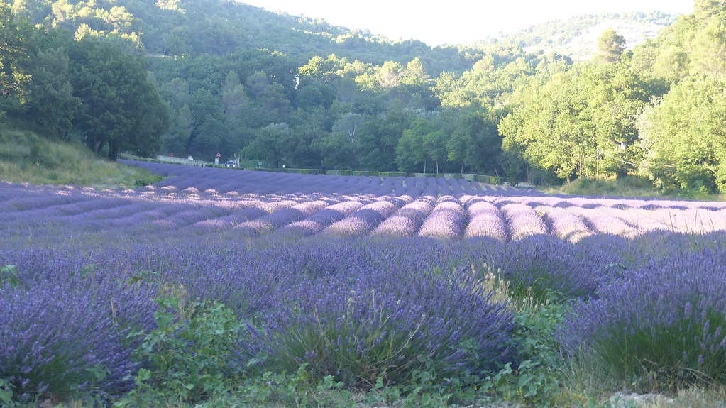 Abbaye Notre-Dame de Sénanque, Provence, 18 Julio 2021