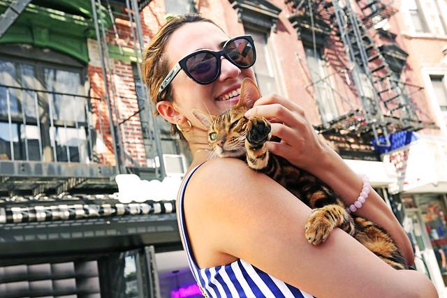 New York Kitty