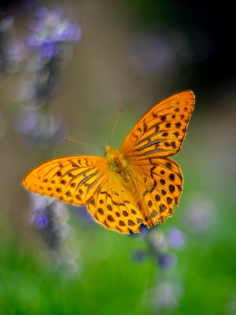 Soft butterfly