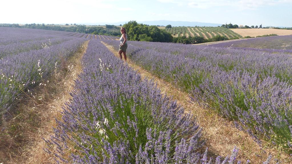 Plateau de Valensole, Provence, 17 Julio 2021