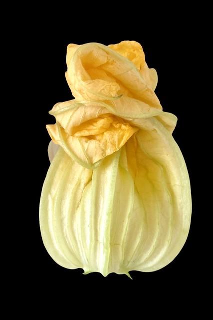 Zucchini Flower.
