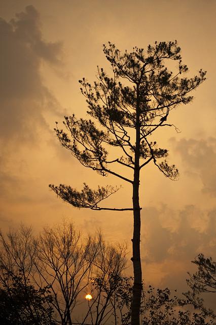 South Korea:  Changwon Pine