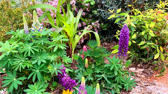 Plantes et Fleurs.
