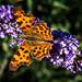 Mein erster Schmetterling mit der RX100