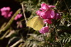 Sunday afternoon in the home garden - butterfly bokeh | July 25, 2021 | Segeberg district - Schleswig-Holstein - Germany