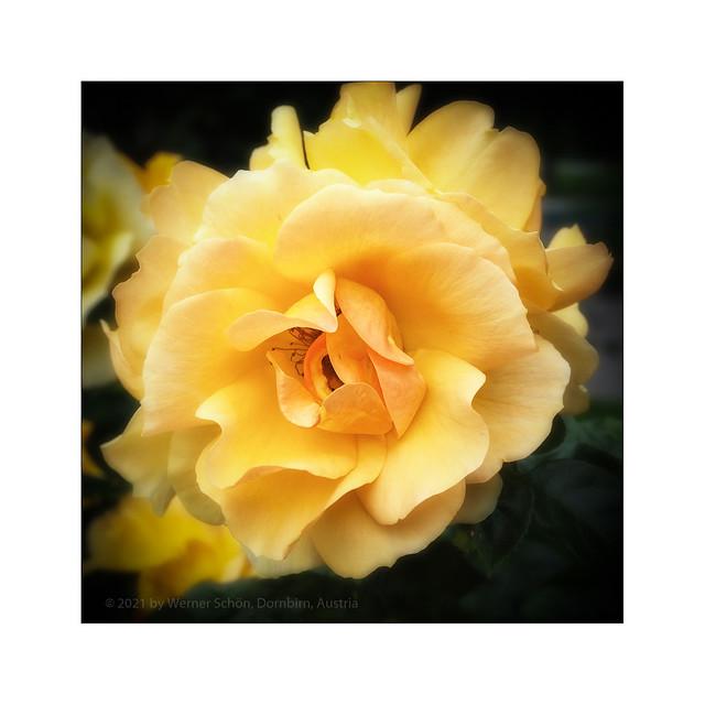 Flowers on Sunday