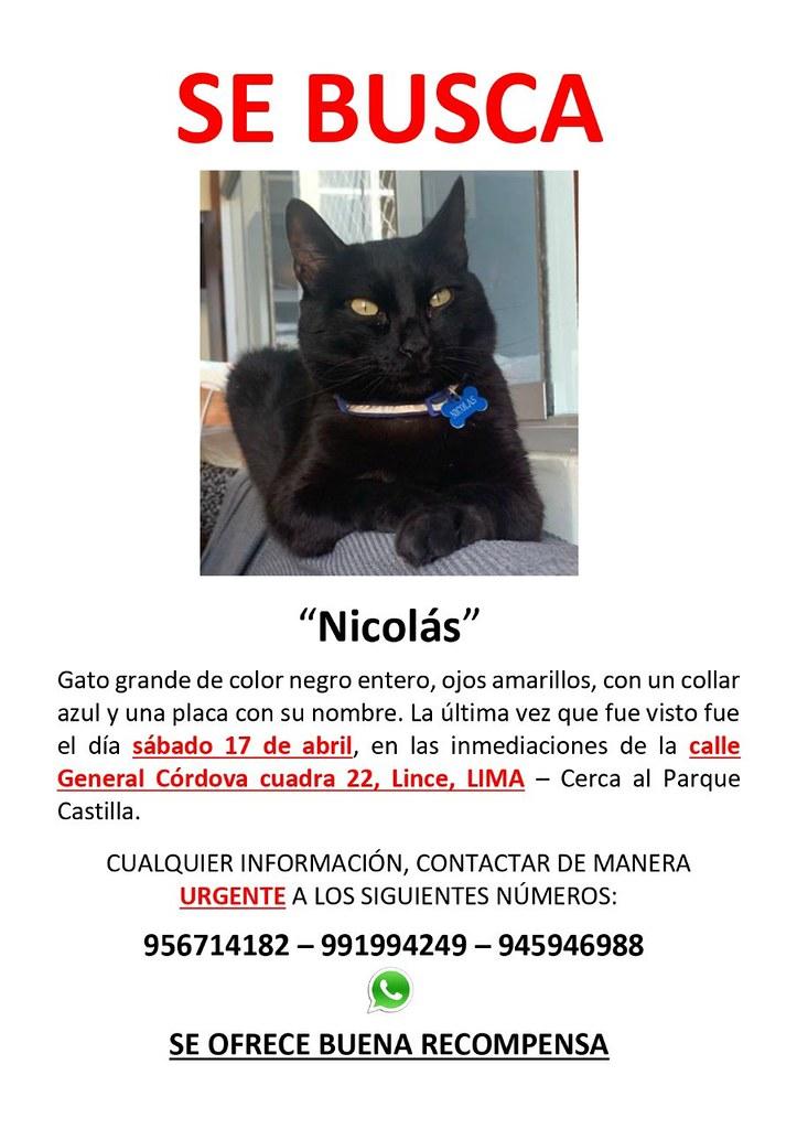 Se busca a Nicolás. Se perdió en Lince, Lima