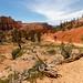 Fairyland, Bryce Canyon