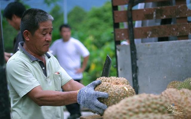 karak durian farm