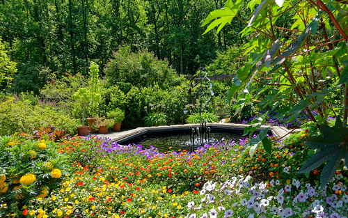 rx100 flowers garden fountain landscape nature