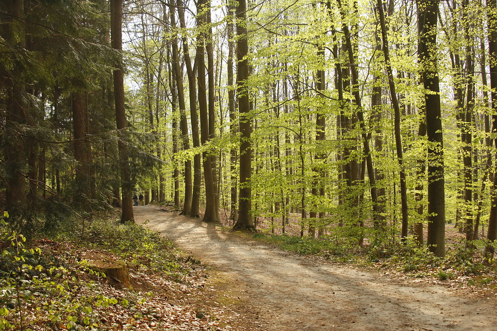 Caminos en Hallerbos