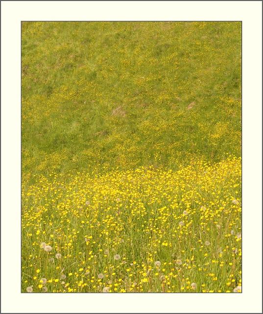 Rottal - gelbe Blumenwiese