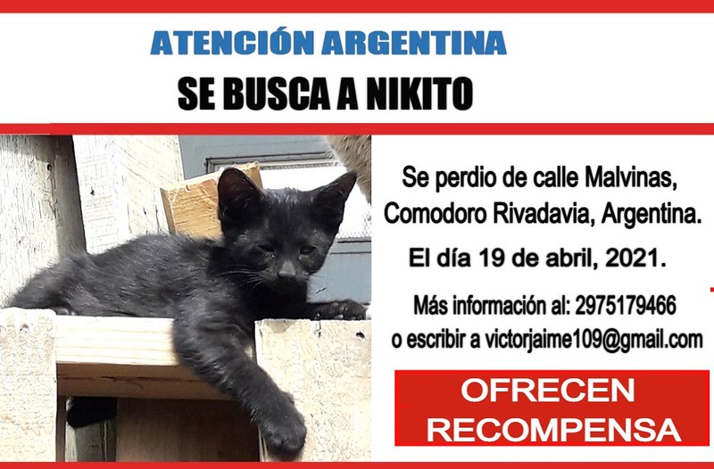 Atención Argentina. Nikito se ha perdido