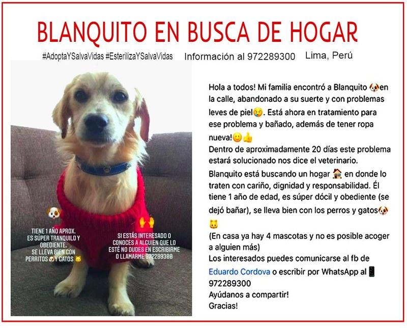 Blanquito en busca de hogar responsable en Lima