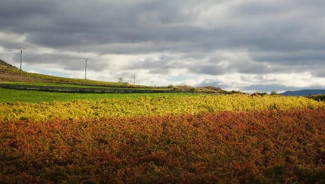 Vineyards. La Rioja. Spain