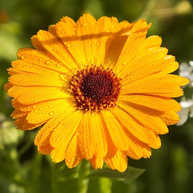 orange wet wild flower