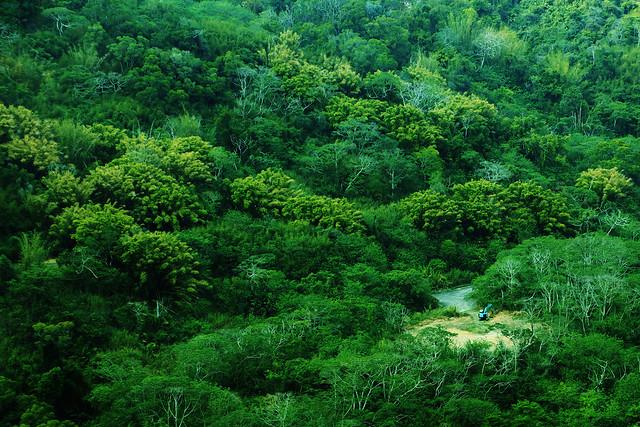逐漸消失的綠 Disappearing Green