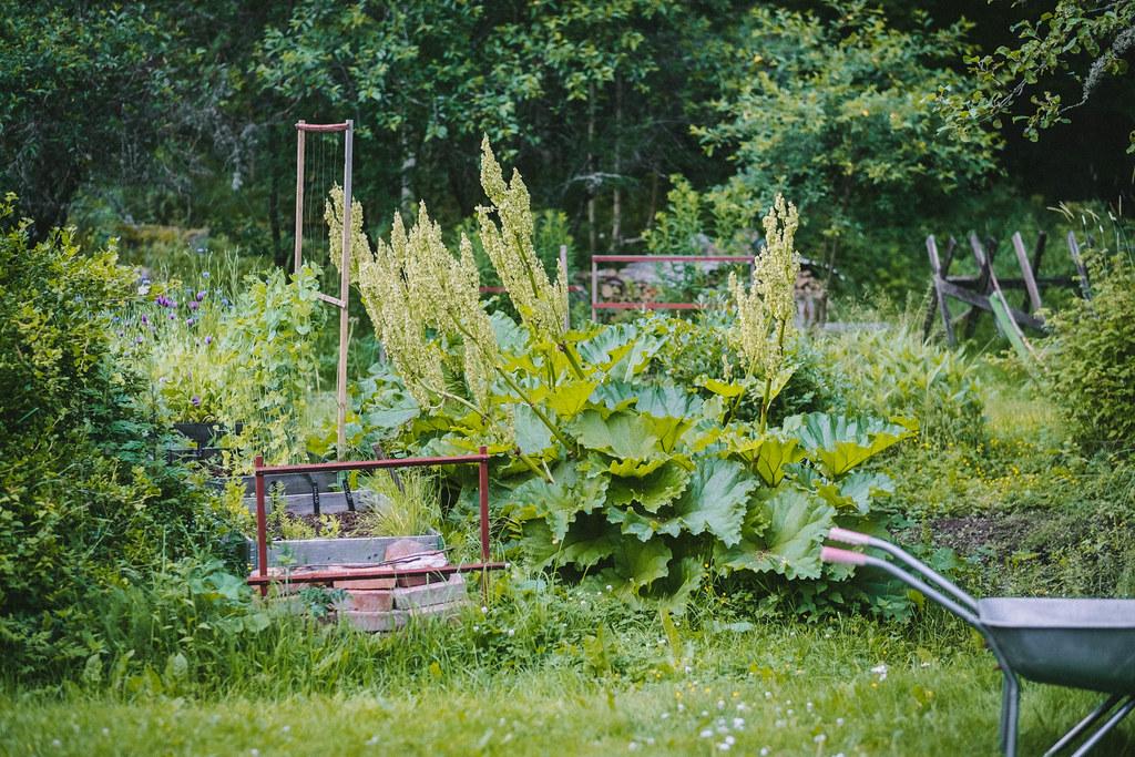 Trädgården 2021_DSF1024