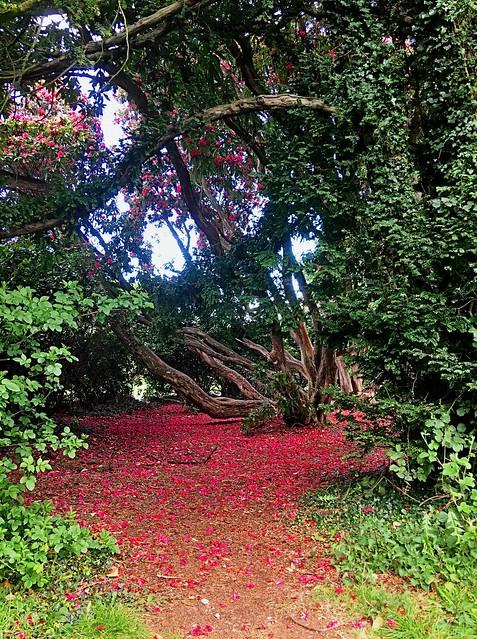 Carpet of blossom