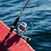 Pesca 5rgi 24/7
