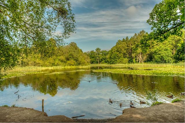 Ducks on Donadea Lake