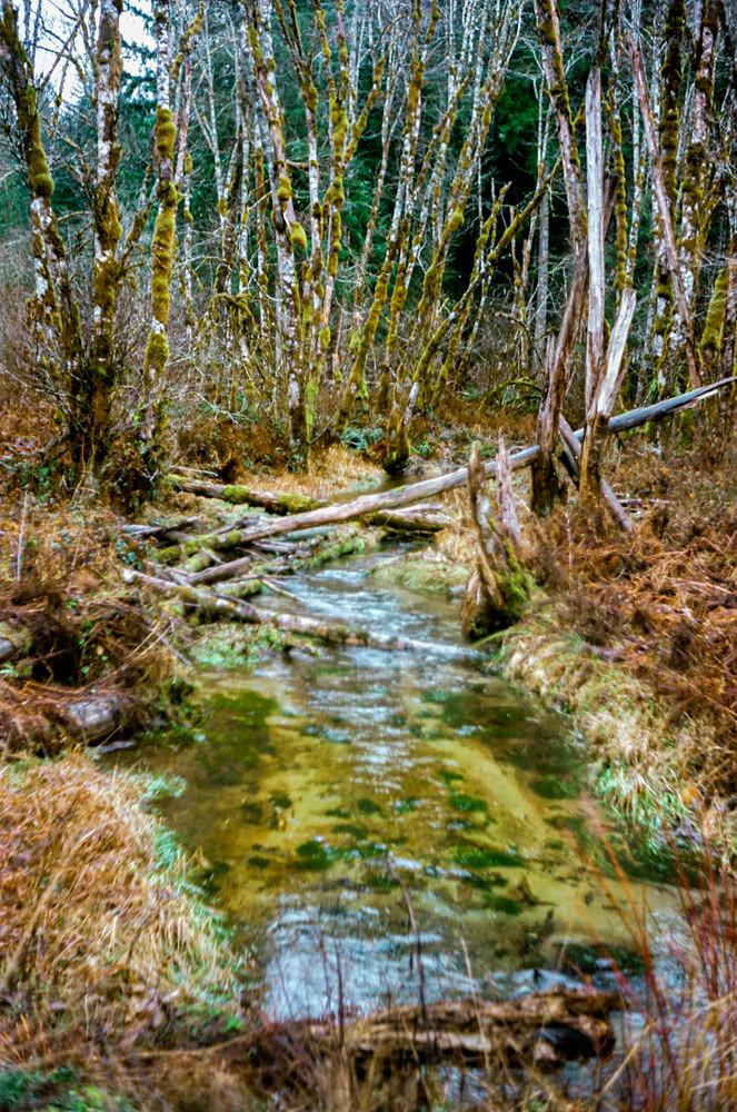 Creek - Kodak Retinette IA