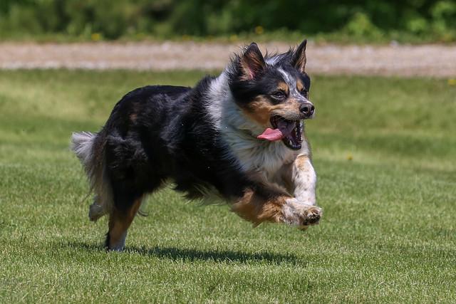 Nikko Running