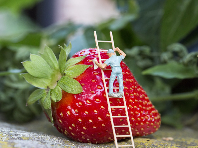 Strawberry washer