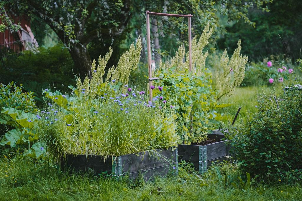 Trädgården 2021_DSF1015