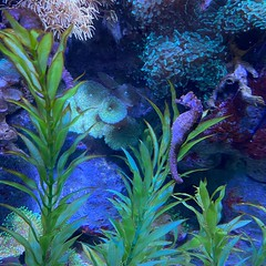 #kvpaz Under the sea. Weekend adventure at @sealife_arizona at @arizonamills. ud83dudc20 It took my kid less than 20 minutes to race thru all the exhibits. ud83dudc1f Then we retraced our steps to enjoy the fish, broken stamp machines, and aquariums made