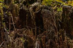 Stump 2021 05 23 01