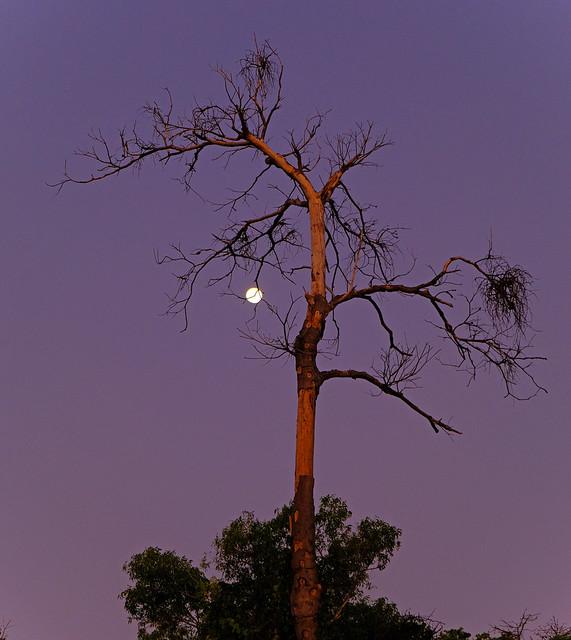 Moonrise at sunset - Casuarina Coastal Reserve, Darwin Harbour, NT, Australia