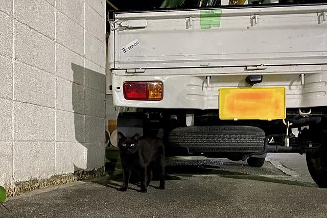 Today's Cat@2021−07−25